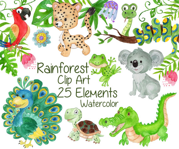 Watercolor . Animals clipart rainforest