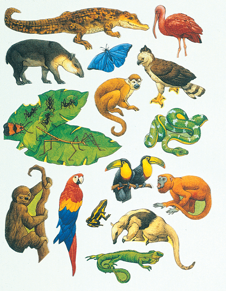Rainforest clipart rainforest ecosystem. Animals