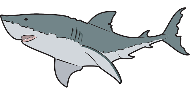 Animal pencil and in. Clipart shark clip art