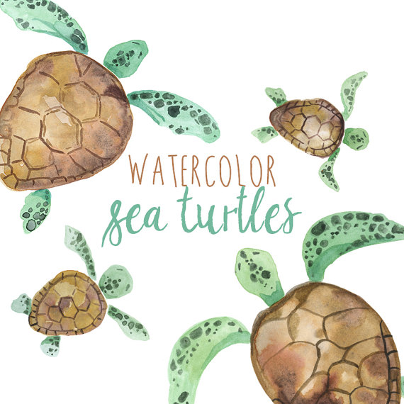 Animals clipart turtle. Watercolor sea turtles illustration