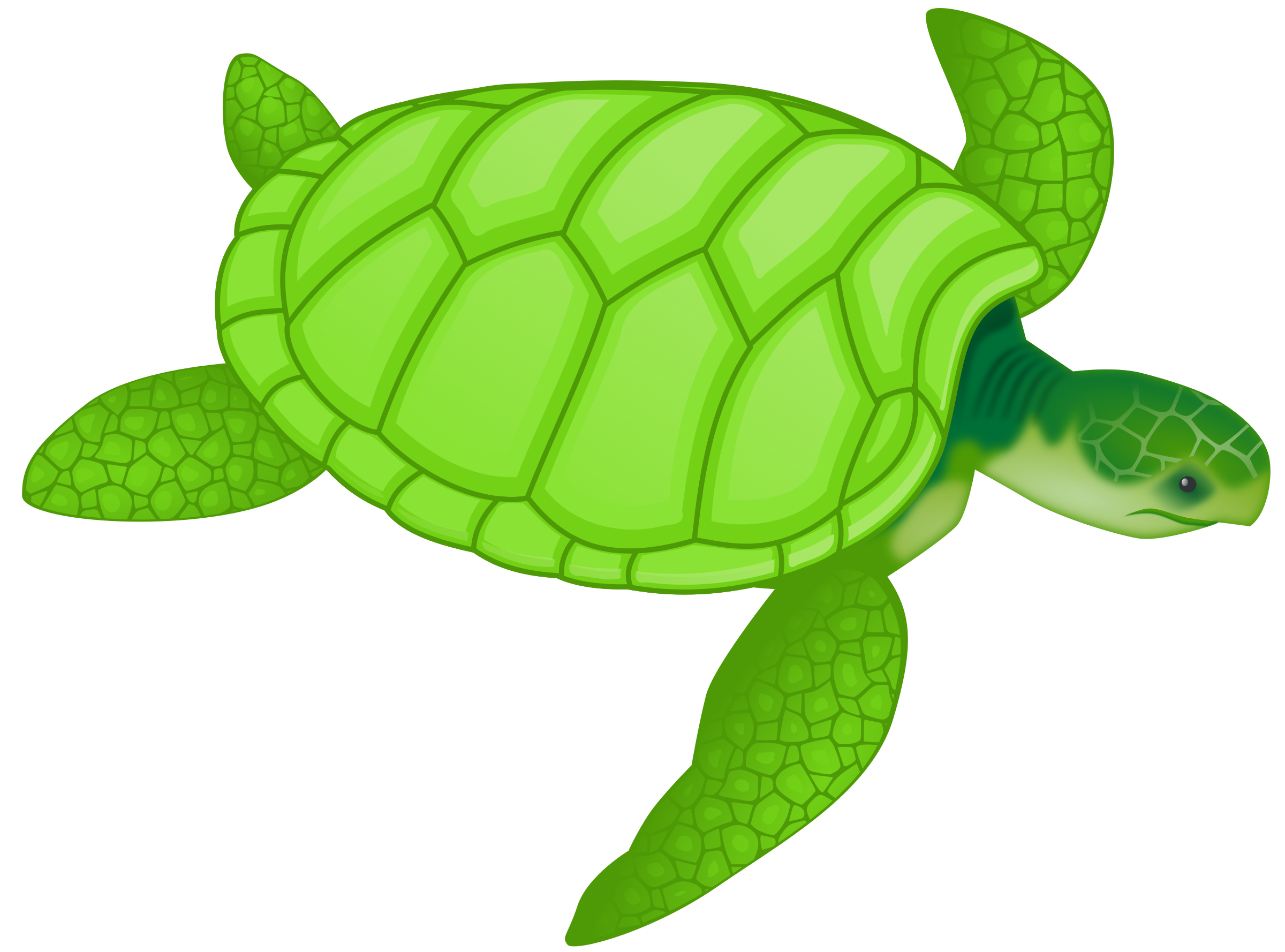 Green sea. Clipart turtle transparent background