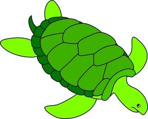 Animal clipart turtle. Free clip art image