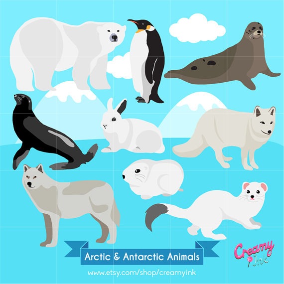 Animals clipart winter. Arctic digital vector clip
