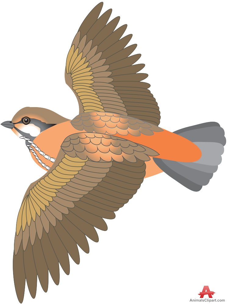 Flying with open wings. Animals clipart bird