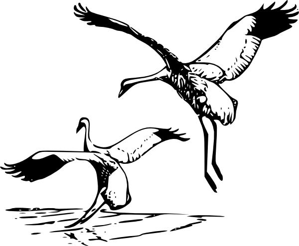 Animals clipart crane. Whooping clip art at