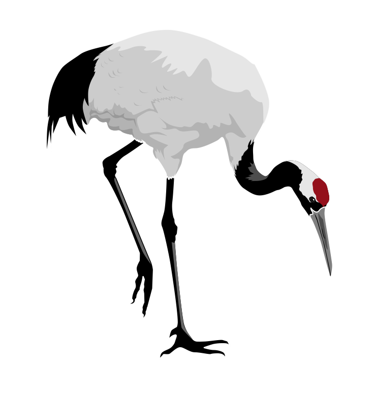 Red . Animals clipart crane