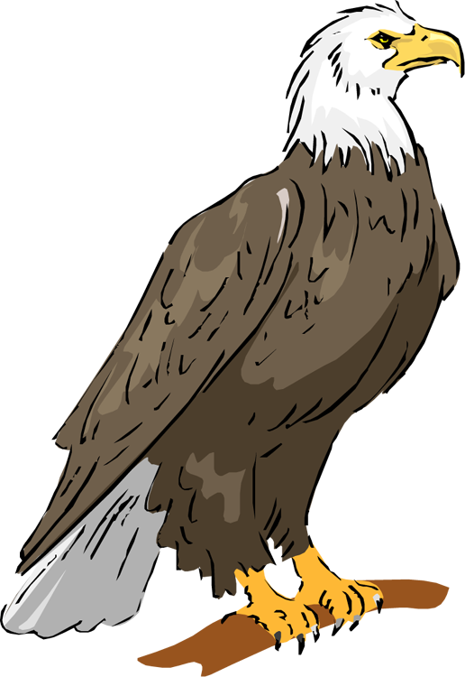Free. Animals clipart eagle