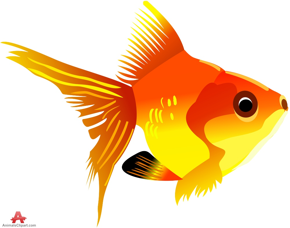 Gallery free downloads by. Animals clipart fish