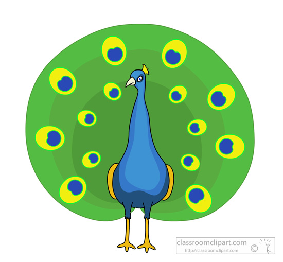 Animal bird with open. Animals clipart peacock