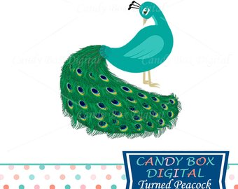 Animals clipart peacock. Etsy