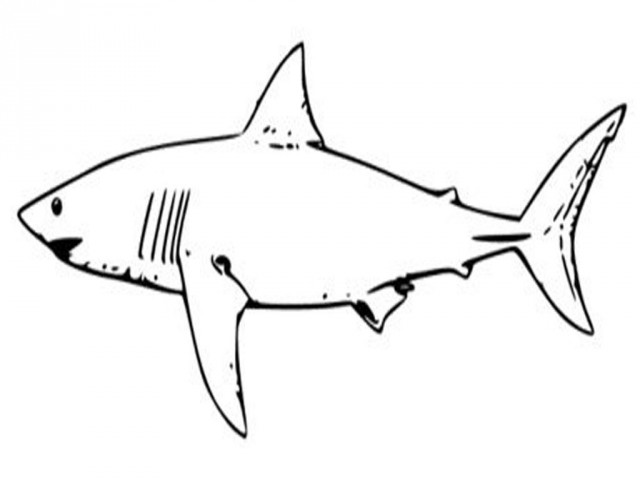 Animals clipart shark. Coloringpages panda free images