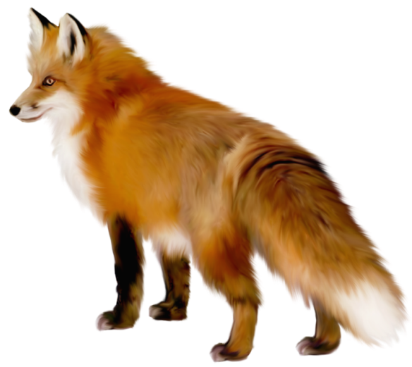 Animals clipart transparent background. Fox png pinterest foxes
