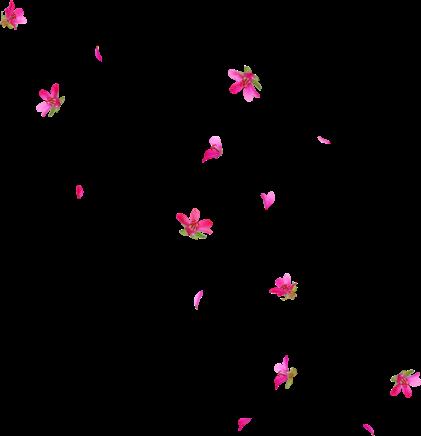 Sakura flowers japan cute. Anime flower png