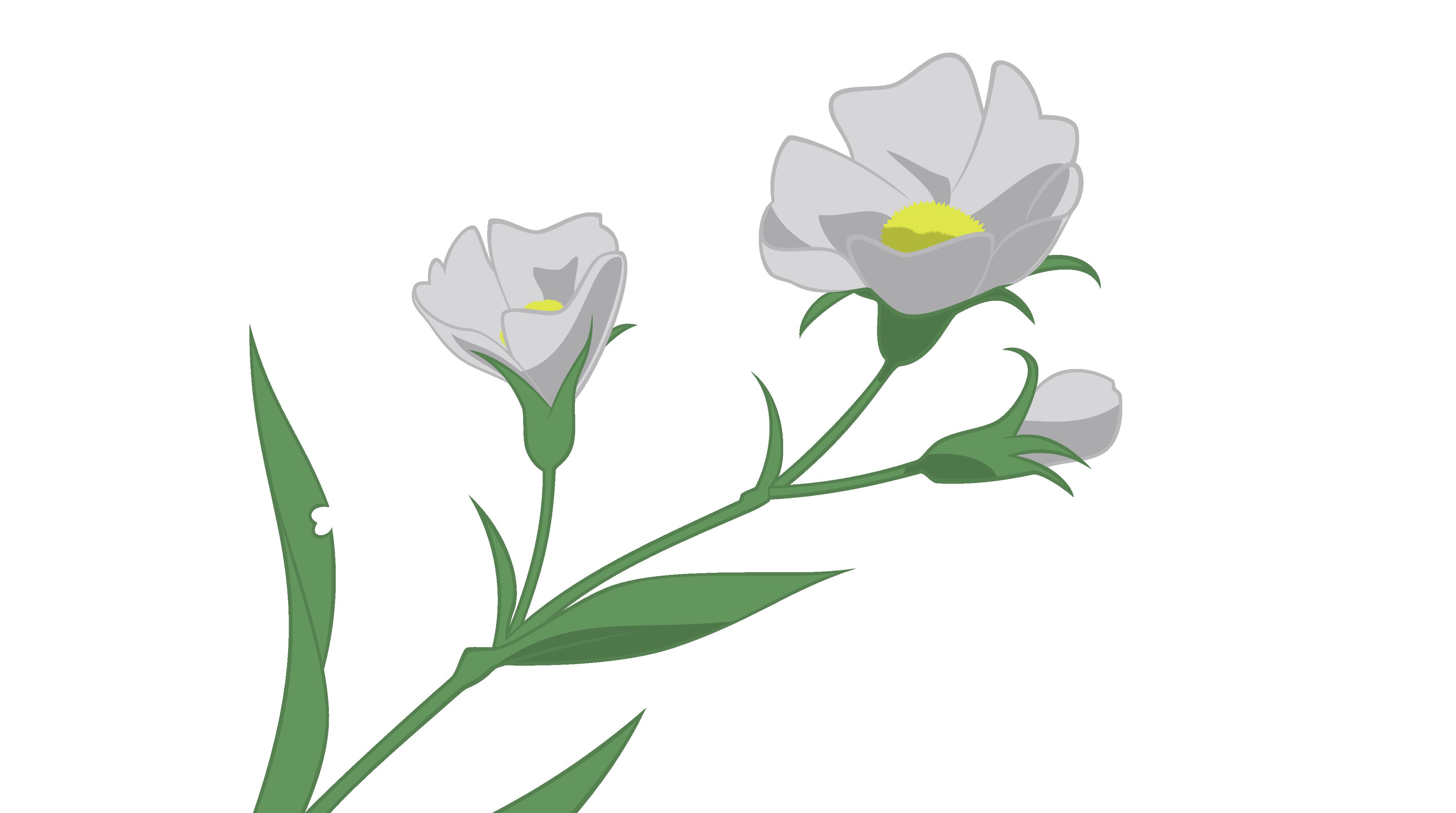 Desktop wallpaper animation transprent. Anime flower png