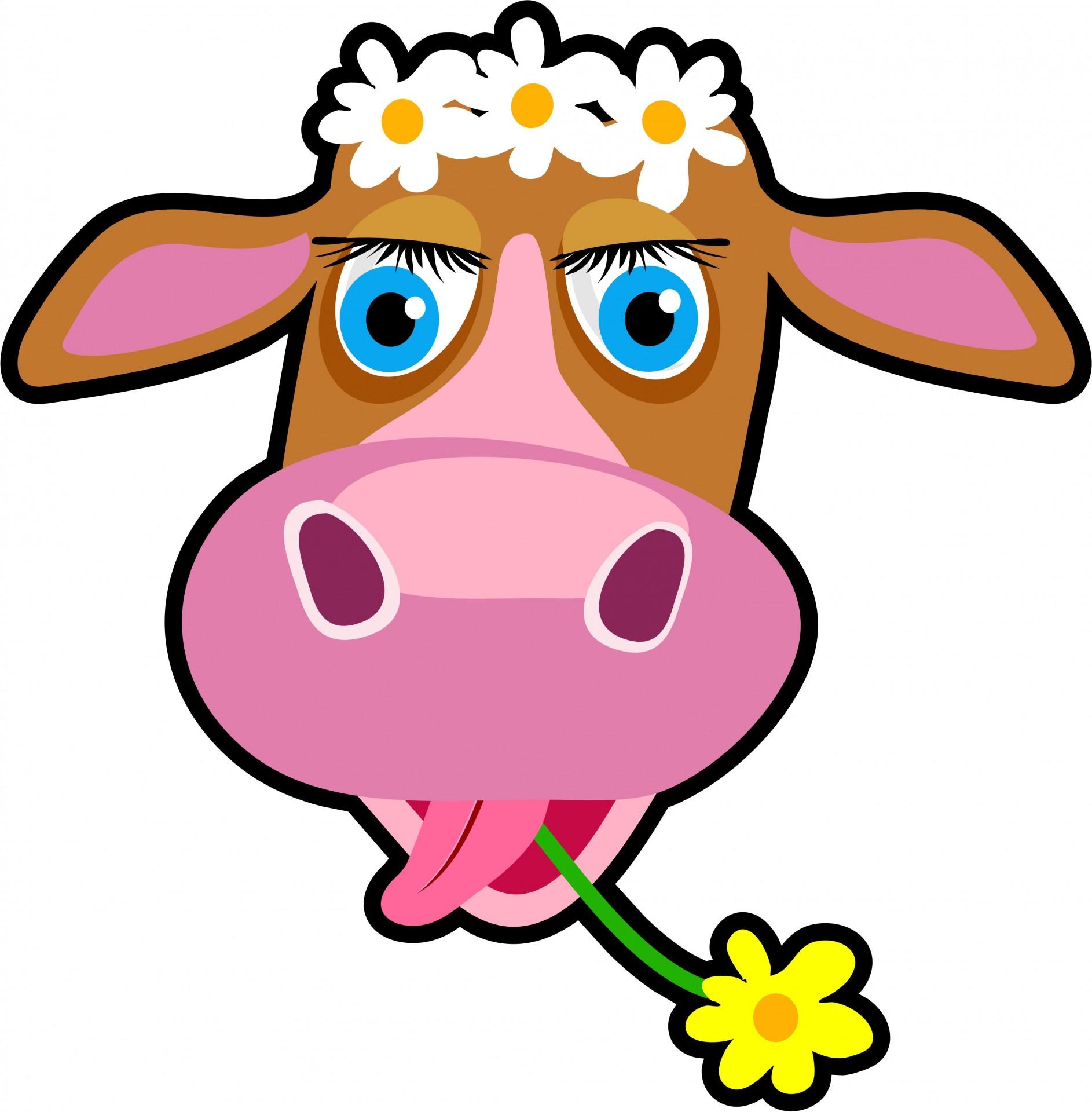 Announcements clipart cartoon. Cow free stock photo