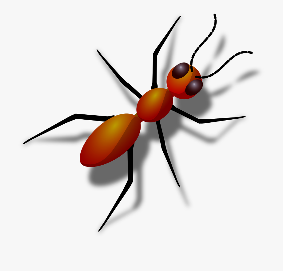 Ant clipart. Free black ants red