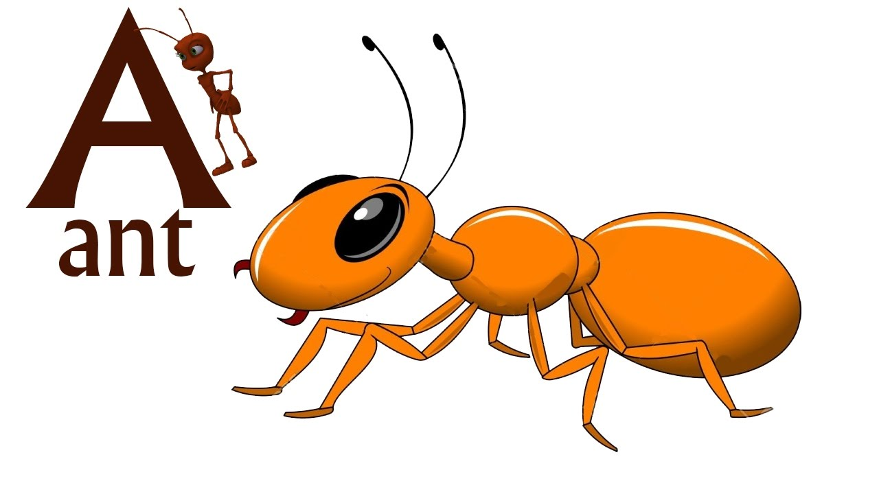 Ant clipart alphabet. Abc songs for baby