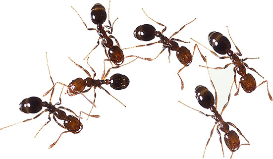 Animated ants free colony. Ant clipart animation