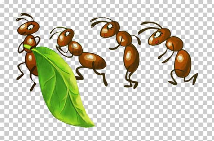 Insect colony fire png. Ant clipart army ant