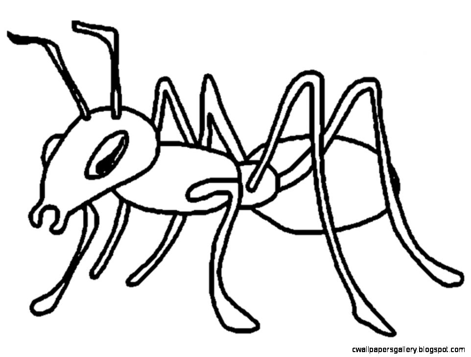 5 clipart ant. Black and white ants