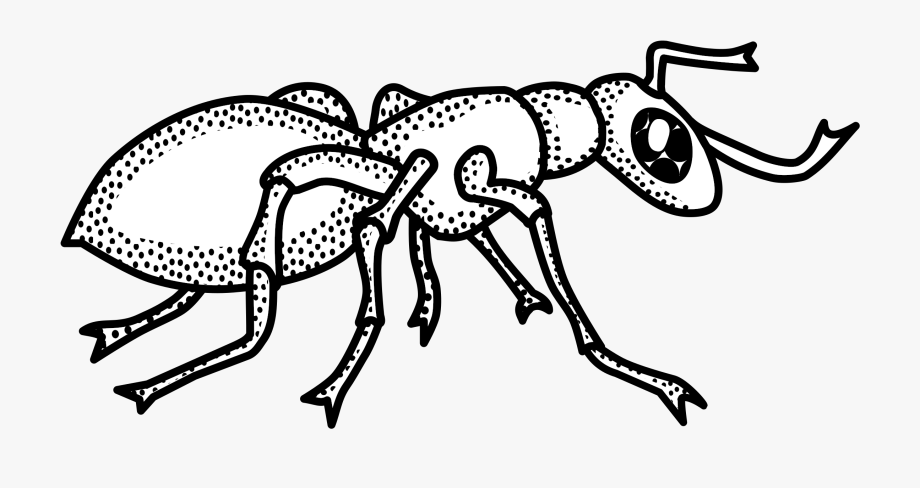 Outline collection clip . Ant clipart black and white
