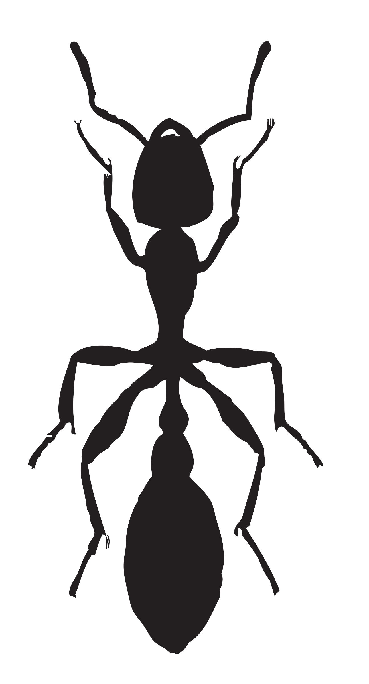 Ant clipart body. Tree big image png