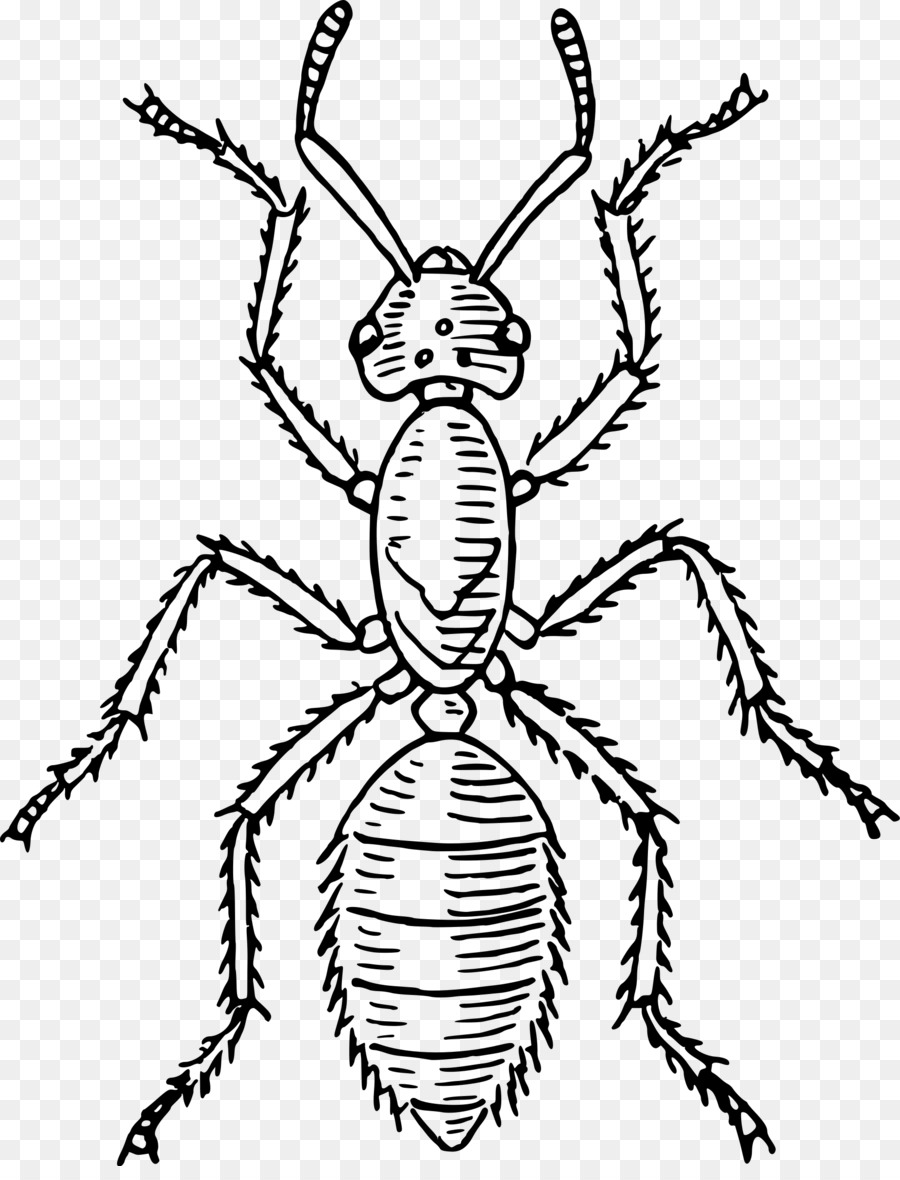 Ant clipart body. Butterfly black and white