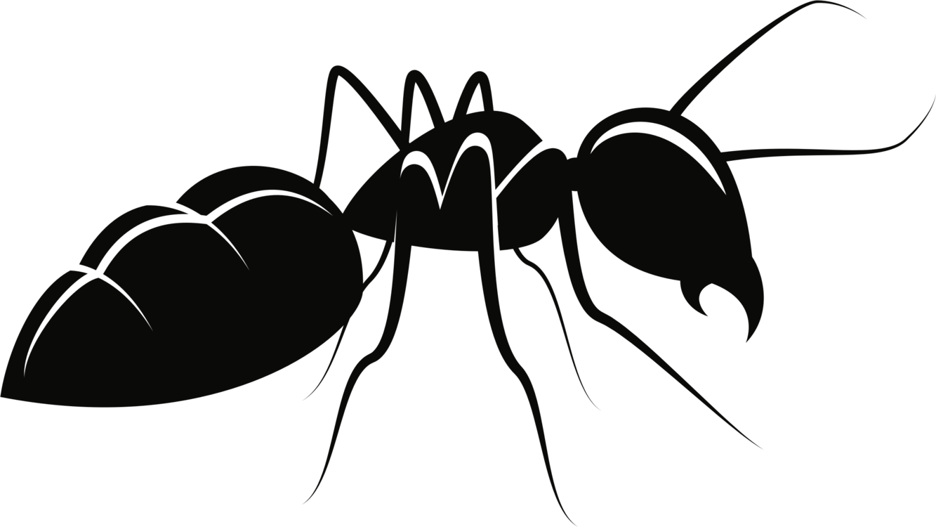 Ant clipart carpenter ant. Fly silhouette png royalty