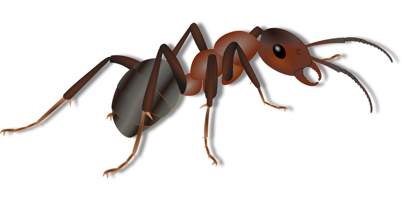ant clipart carpenter ant