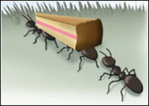 More related pictures ants. Ant clipart carry
