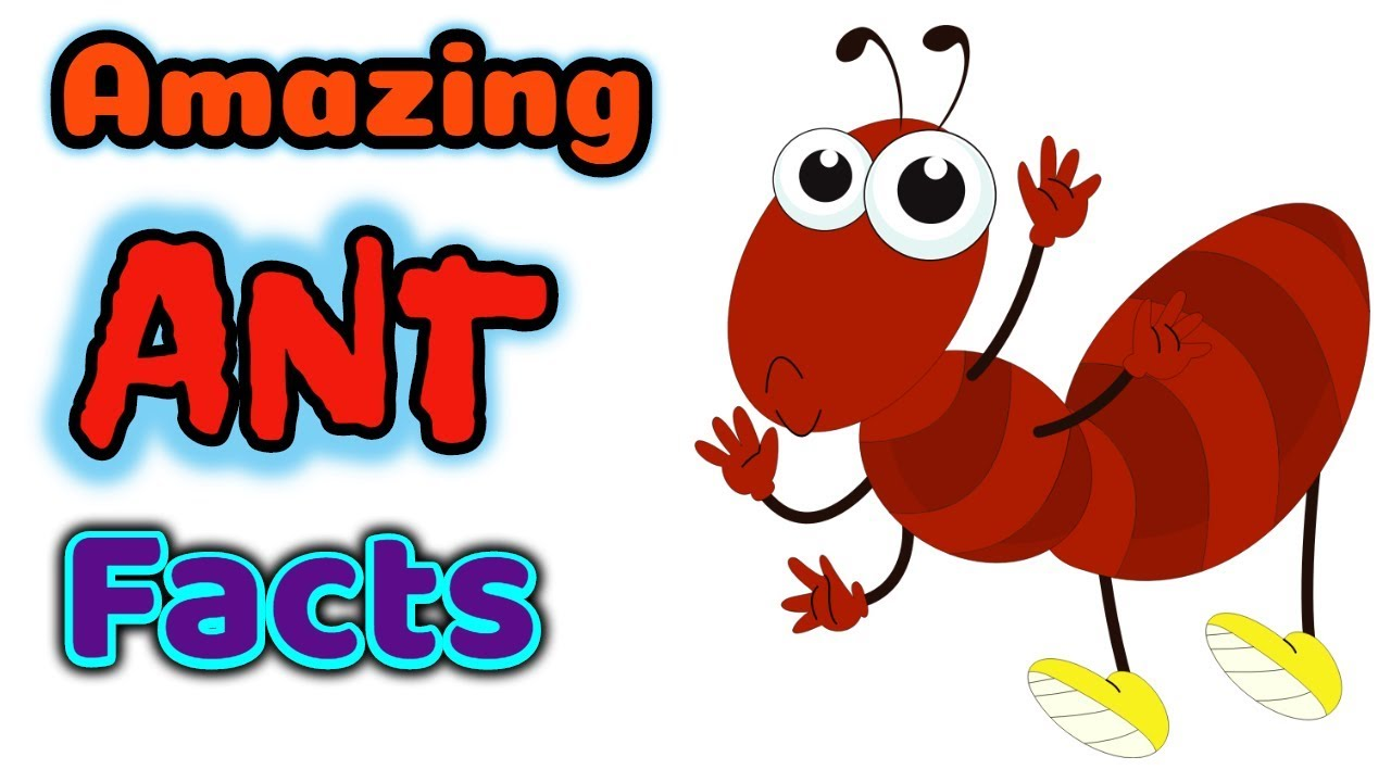 Facts about ants for. Ant clipart children's