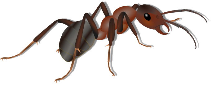 Ants clipart clear background. Ant png transparent images