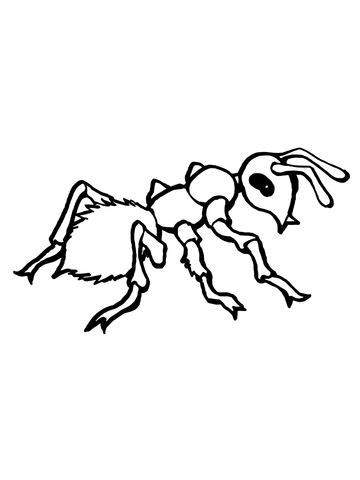 Realistic ant coloring free. Ants clipart colouring page
