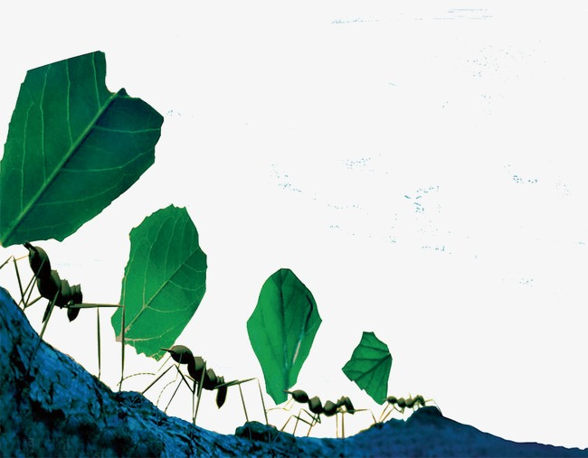 Ant transport png image. Ants clipart cooperation
