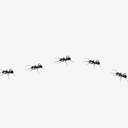 Ants line element png. Ant clipart cooperation