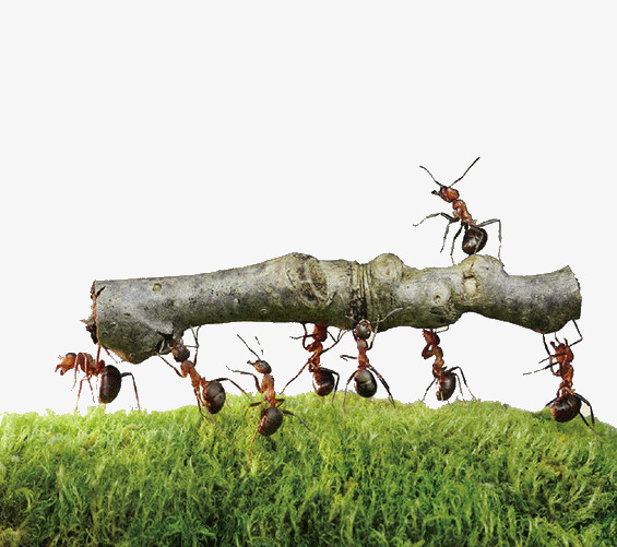 Ants carry wood meadow. Ant clipart cooperation