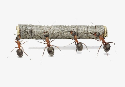 Ants carry tree trees. Ant clipart cooperation