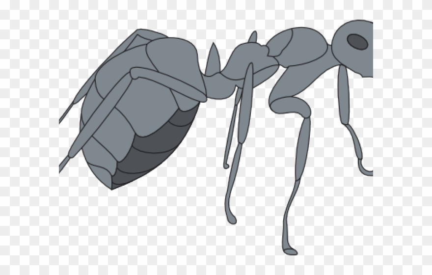 Ant clipart gray. Png download pinclipart