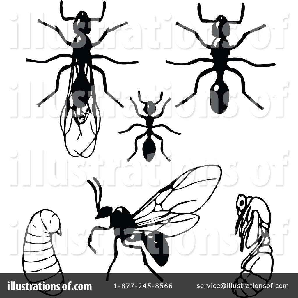 Ant clipart illustration. By prawny vintage royaltyfree