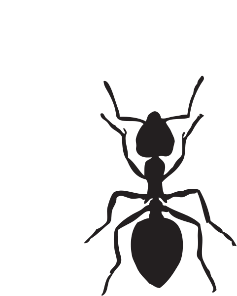 Small collection free ants. Ant clipart illustration