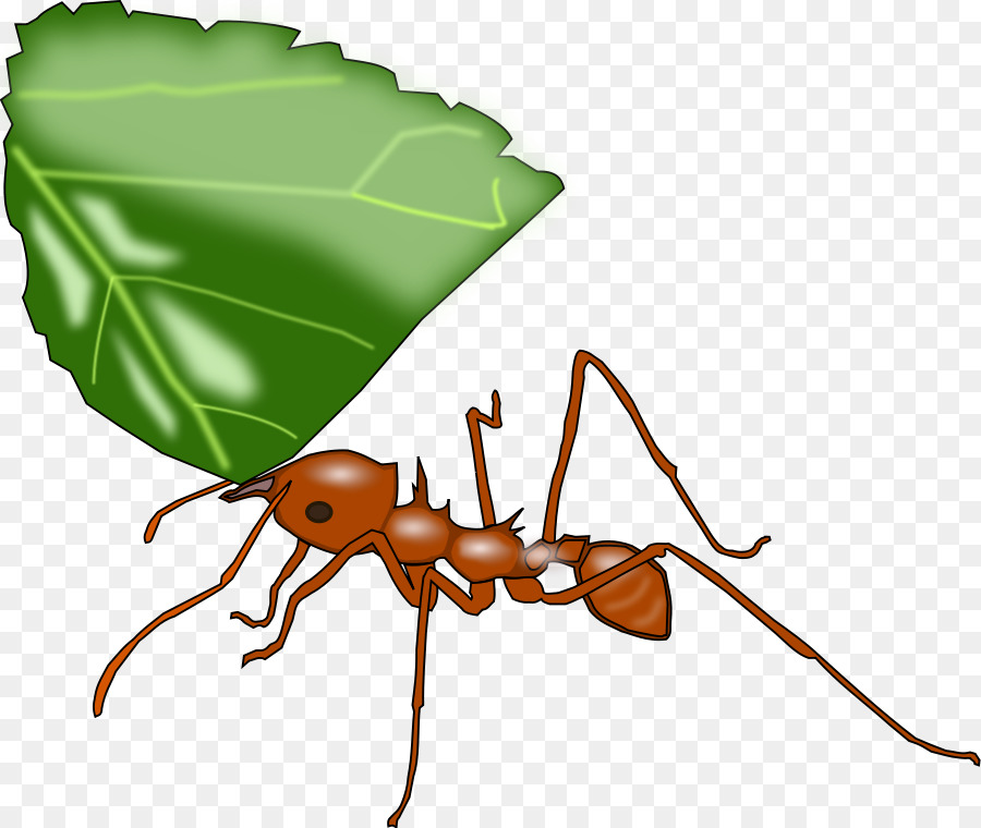 Leafcutter atta cephalotes clip. Ant clipart leaf cutter ant