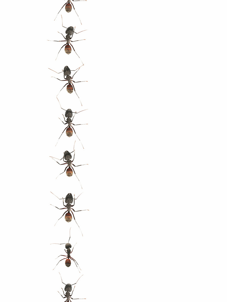 Free marching cliparts download. Ants clipart line