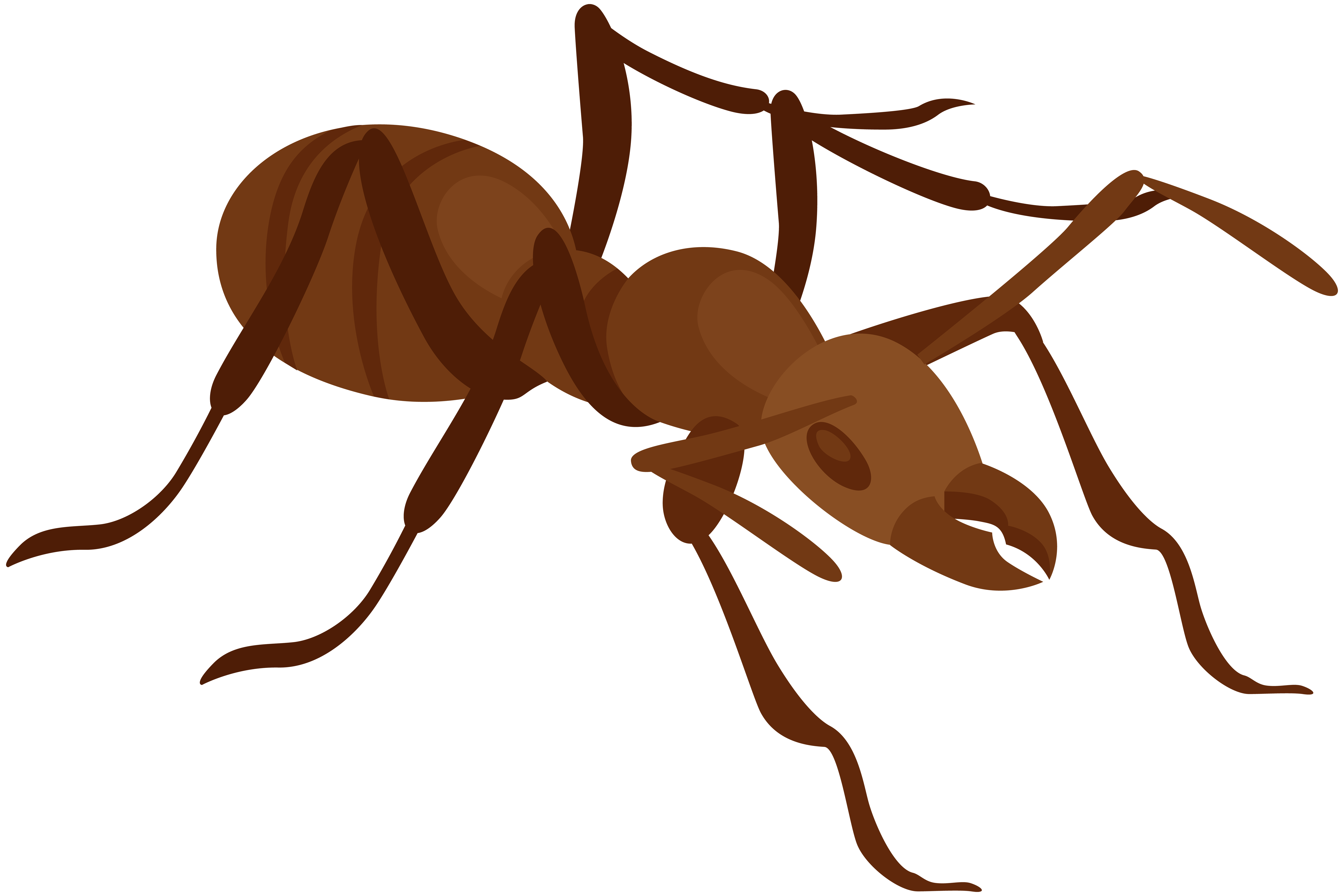 Ant png clip art. Ants clipart name
