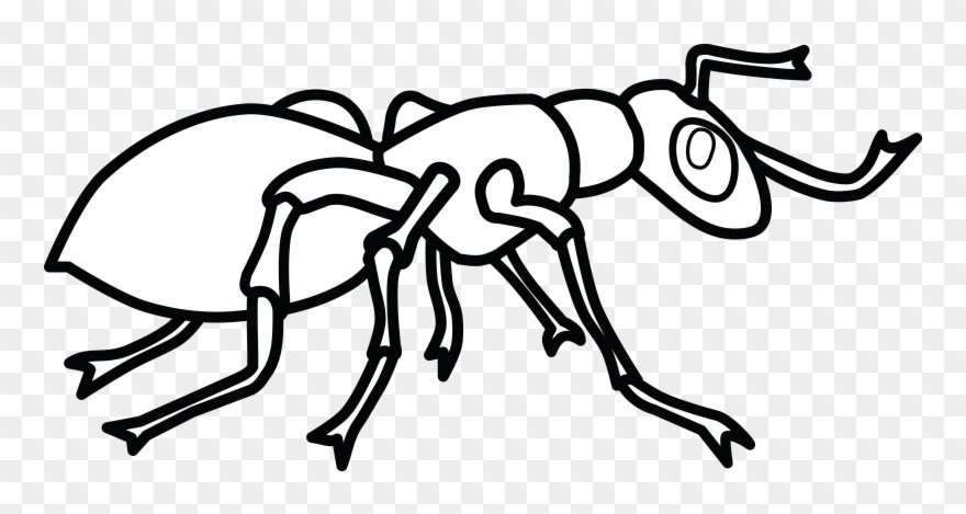 Free of an ant. Ants clipart black and white