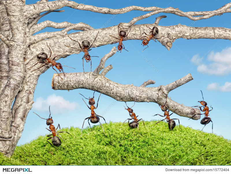 Team of ants work. Ant clipart teamwork