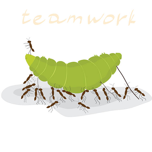 March collection army of. Ant clipart teamwork