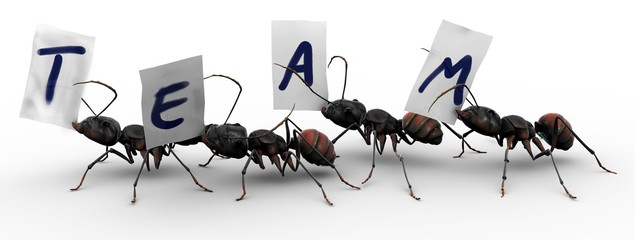 Photos royalty free images. Ant clipart teamwork