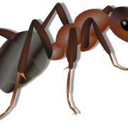 Ants clipart transparent background. Ant png images all