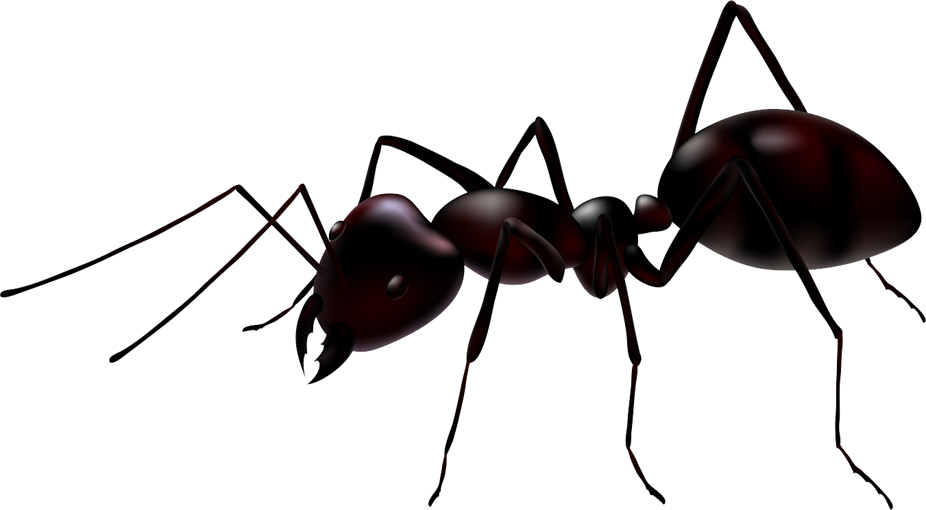 ant clipart transparent background