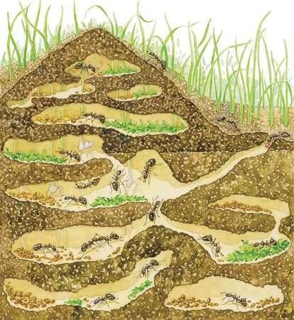 Ants clipart underground. Cross section of a